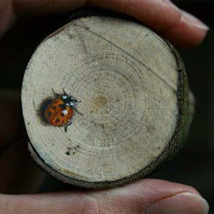 Stilleven 'Lieveheersbeestje' door Hanny de Beer
